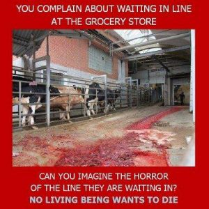 Cows going to slaughter. You complain about waiting in line at the grocery store - can you imagine the horror of the line they are waiting in? No living being wants to die. Picture from: http://www.rabbitadvocacy.com/animal_rights_page.htm