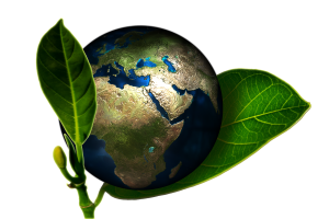 Globe of planet Earth encased in two green leaves