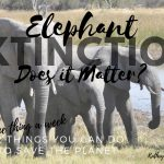 52 Things You Can Do to Save the Planet: Elephant Extinction – Does it Matter?
