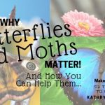 Butterflies and Moths Matter! Here's How You Can Help Them…