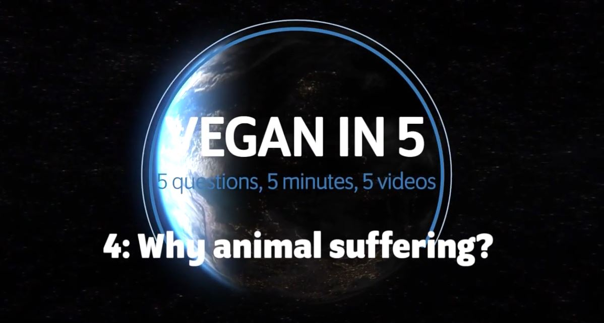 Vegan in 5: Video 4: What about animal suffering?
