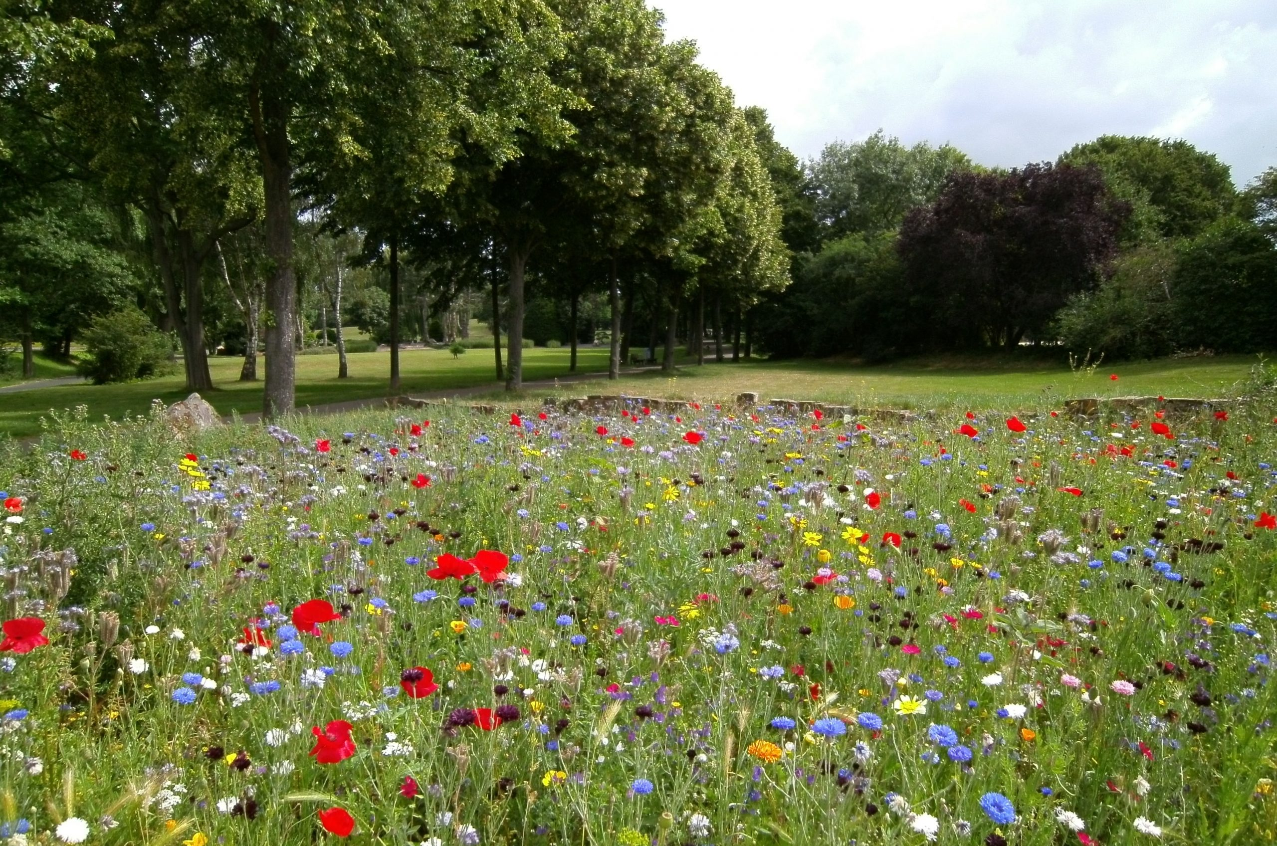 Photo of park with flowers, grass and trees